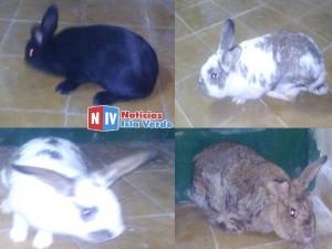 conejos (Copiar)